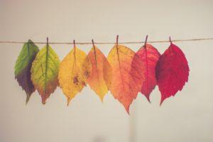 """Alt=""""autunno"""""""